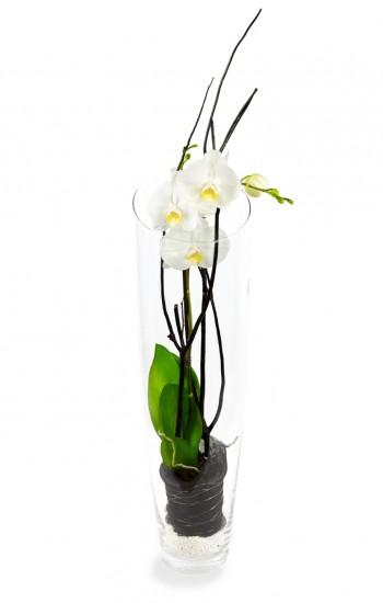 Orchidée en vase
