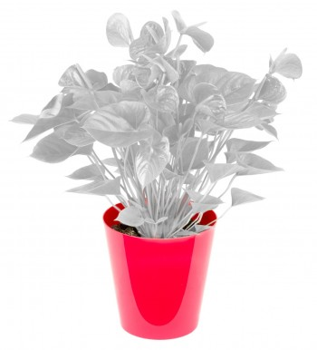 Cache-pot pour plantes