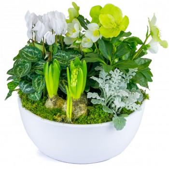 composition de plantes fleuries avec des hellébores, des jacinthes et un cyclamen