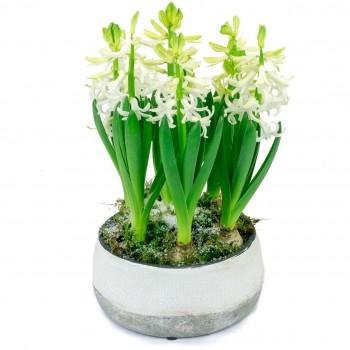 Coupe de jacinthes blanches dans un contenant assorti