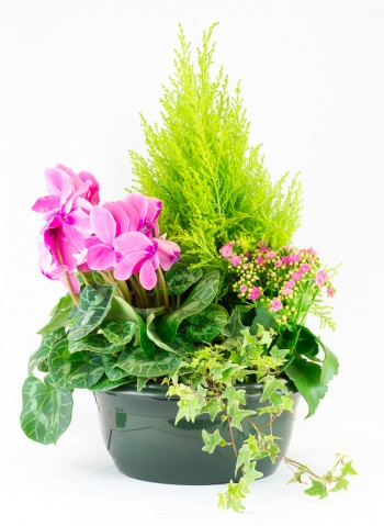 jardin de plantes - deuil