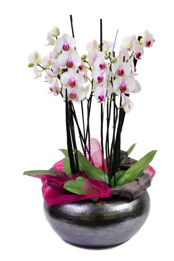 Coupe ovale avec orchidées blanches et roses