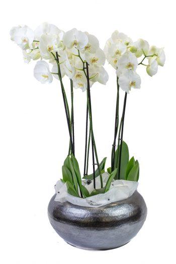 Coupe ovale avec orchidées blanches