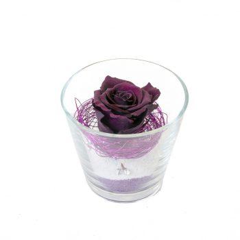 Rose éternelle pourpre dans verrerie