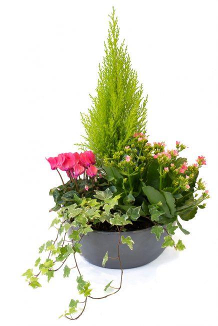 Coupe 4 plantes: arrangement de 4 plantes de saison pour l'extérieur
