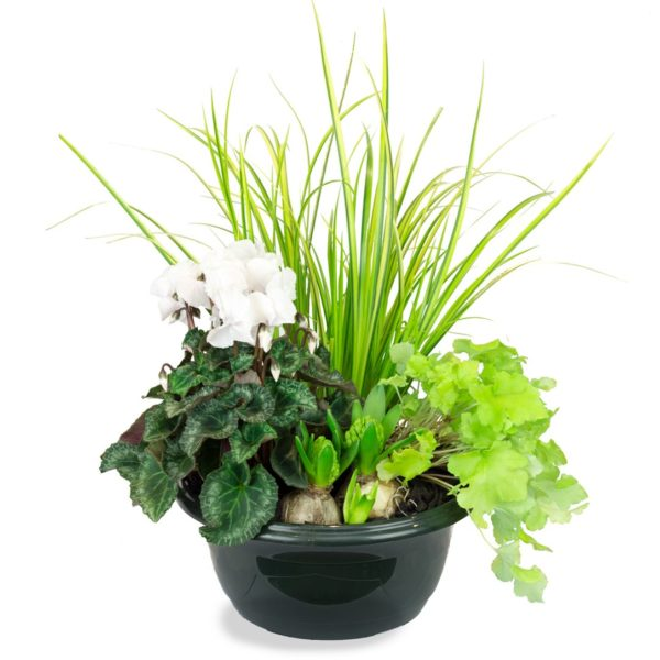 Coupe 4 plantes