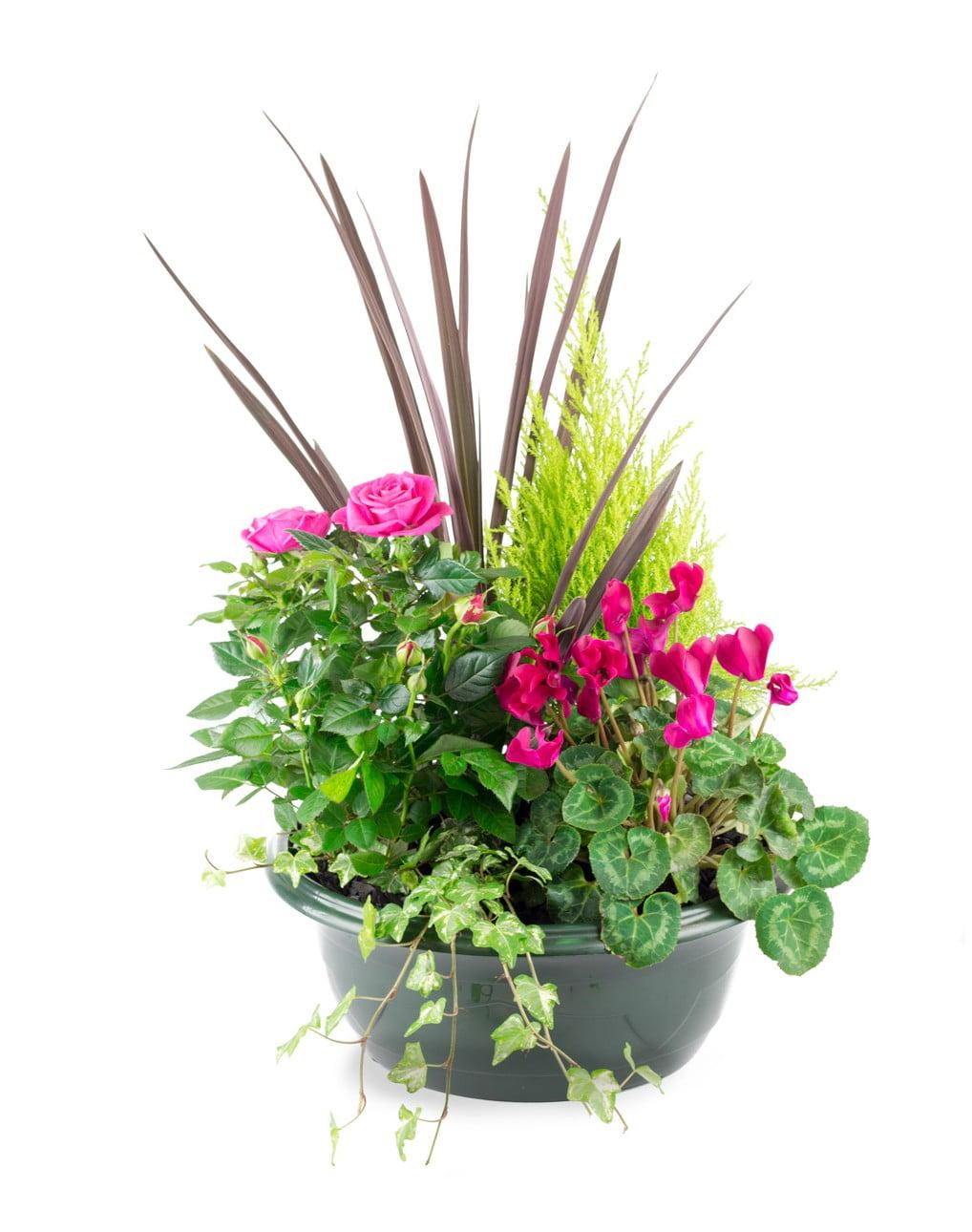 Coupe 5 plantes
