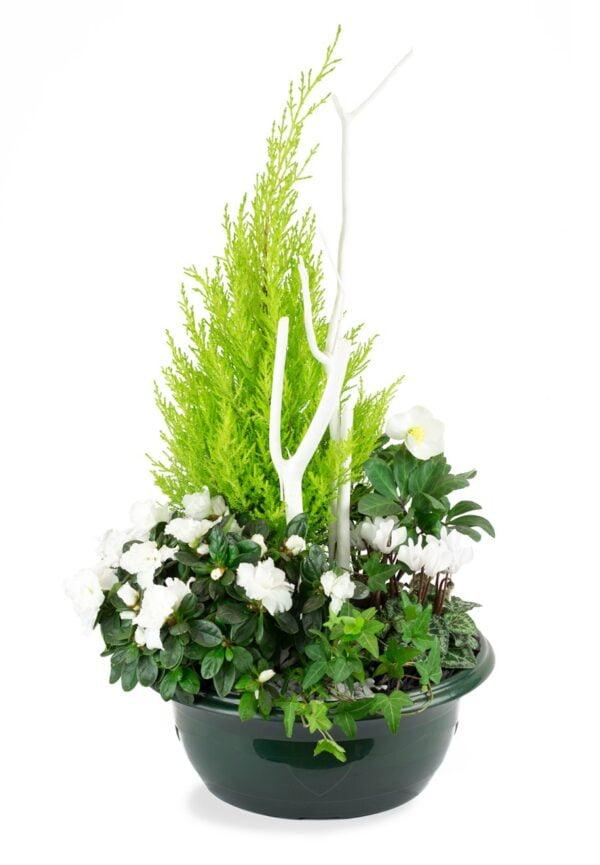Coupe 5 plantes de saison