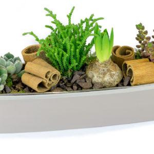 Jardin de plantes grasses avec une jacinthe et des décorations
