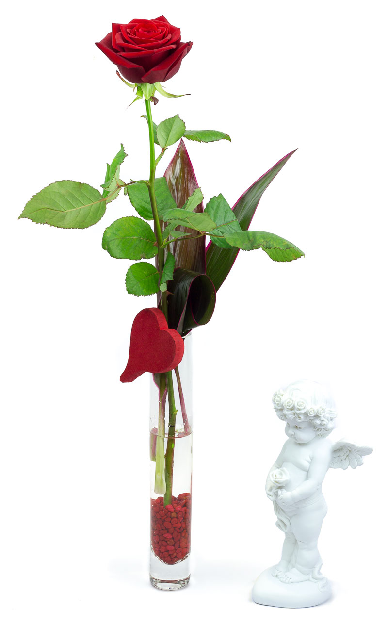 Rose en soliflore pour la Saint Valentin