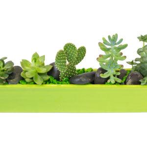 Jardin de succulentes avec accessoires