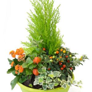 Coupe 5 plantes: Arrangement de 5 plantes de saison pour l'extérieur