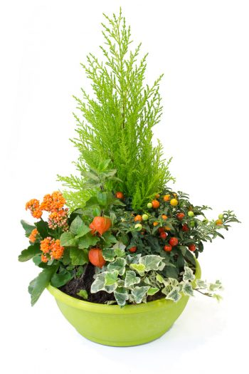 Ext rieur archives villa florale for Plante exterieur toute saison