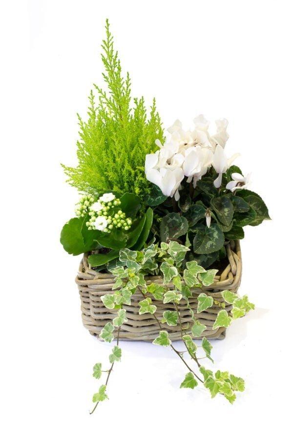 Coupe 4 plantes. Arrangement de 4 plantes de saison pour l'extérieur dans panier en osier.