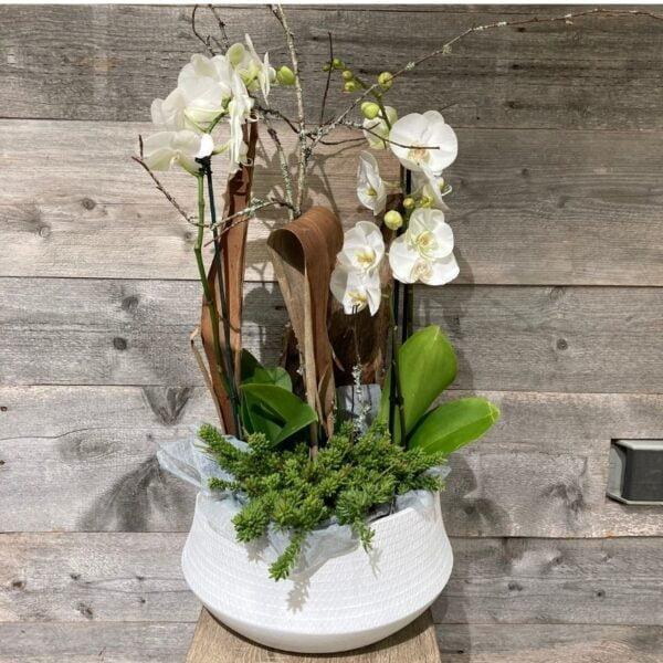 ensemble d'orchidee