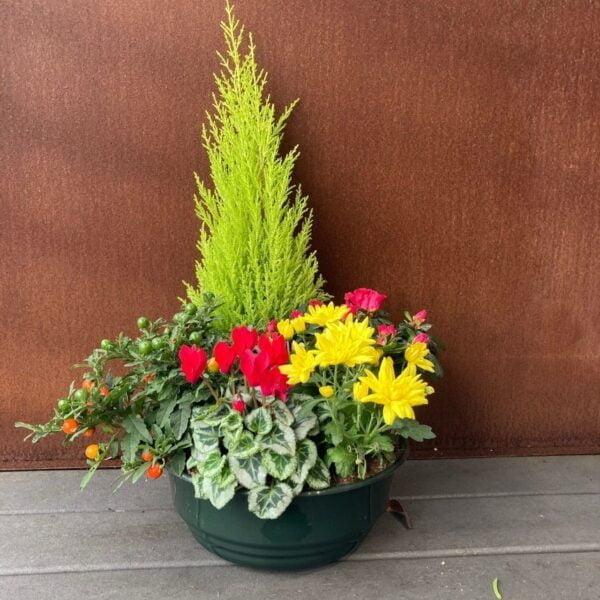 plante extérieur : jardin paysage 5 plantes
