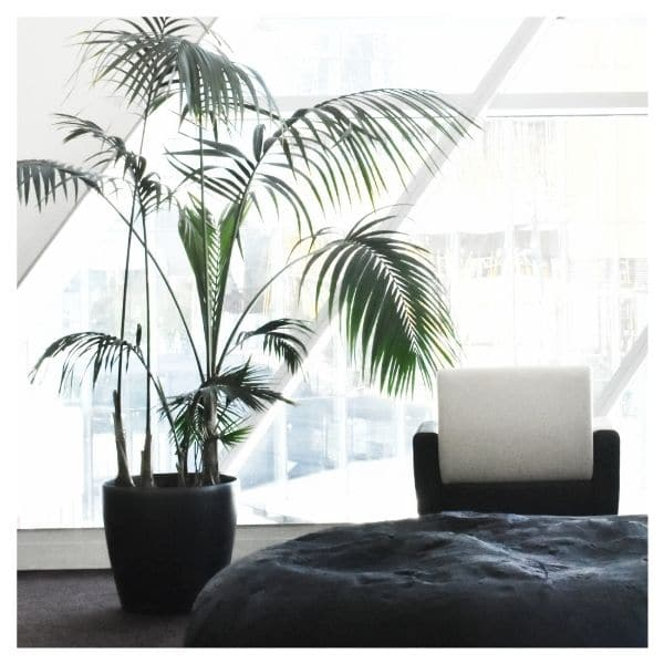 entreprise plantes